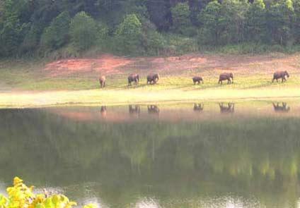 Kuttanad River Resort Alleppey