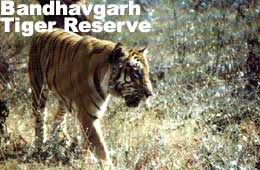Travel to Bandhavgarh