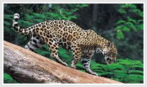 The Lure of Jungle-Wildlife tour