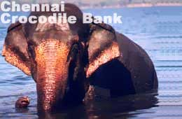 Chennai Crocodile Bank