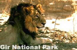 http://www.indiaprofile.com/images/wildlife/gir-national-park/gir-national-park.jpg