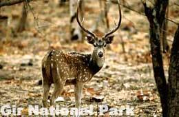 how to go gir national park